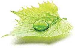 leaf-sn